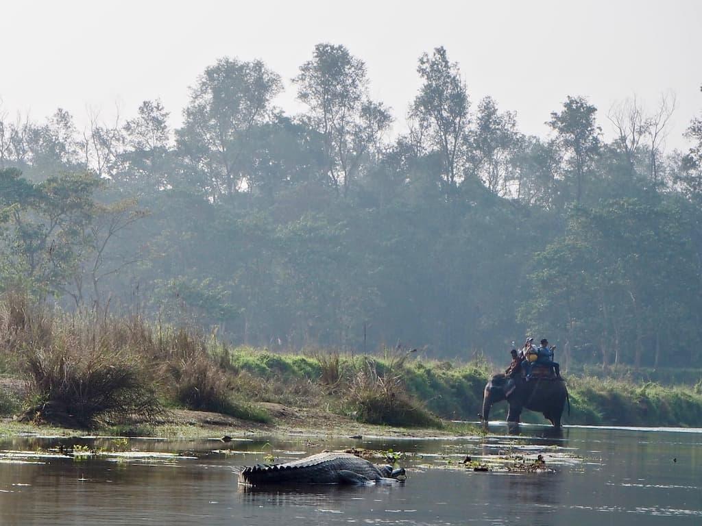 Gangesgavial Chitwan Nationalpark