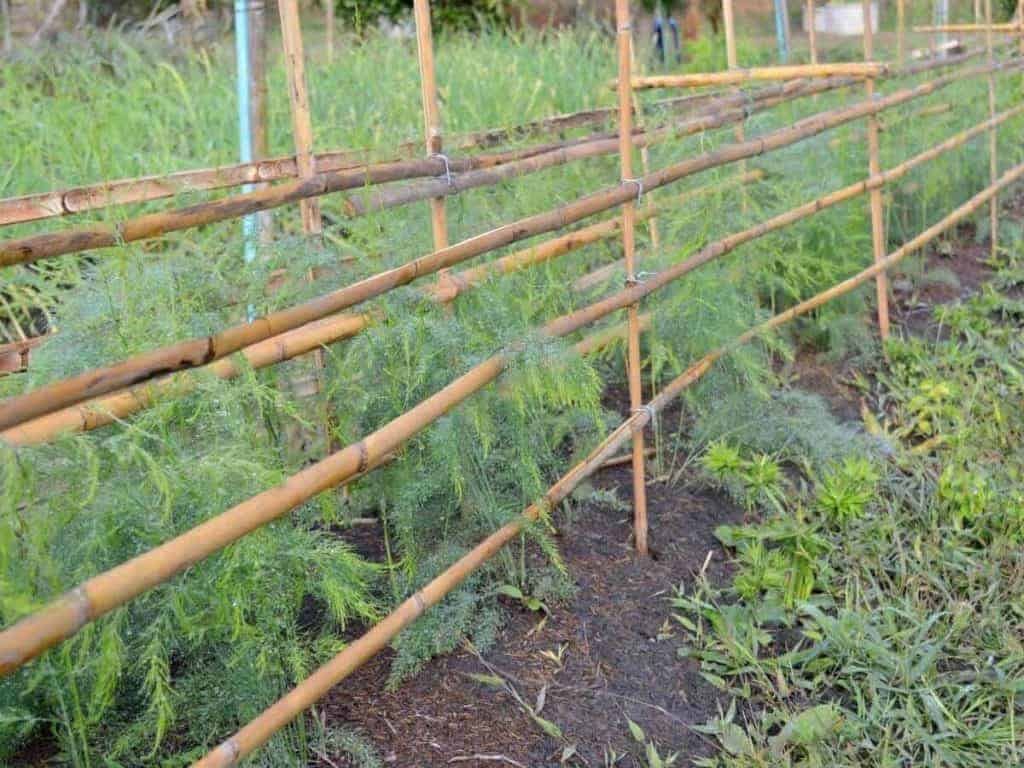 How to Plant Dill From the Grocery Store