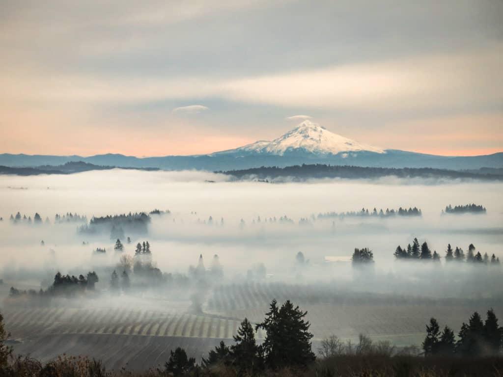 Mount Hood high above vineyards in the Willamette Valley of Oregon.
