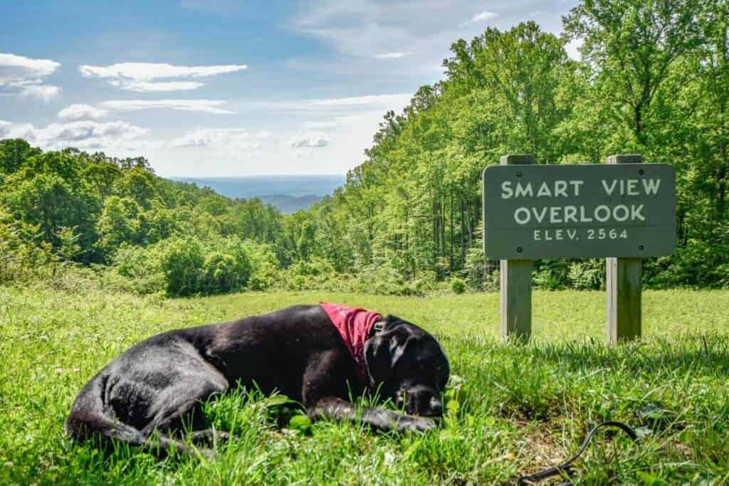 A black lab lies next to an overlook sign on the Blue Ridge Parkway