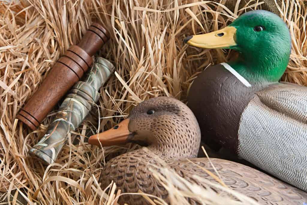 wood duck calling