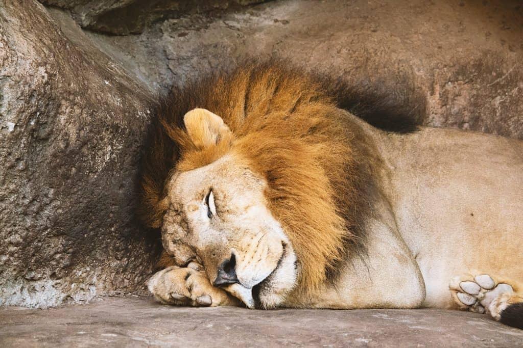 כמה נוח לקום בבוקר, אחרי שינה מעולה, במיטה מעולה