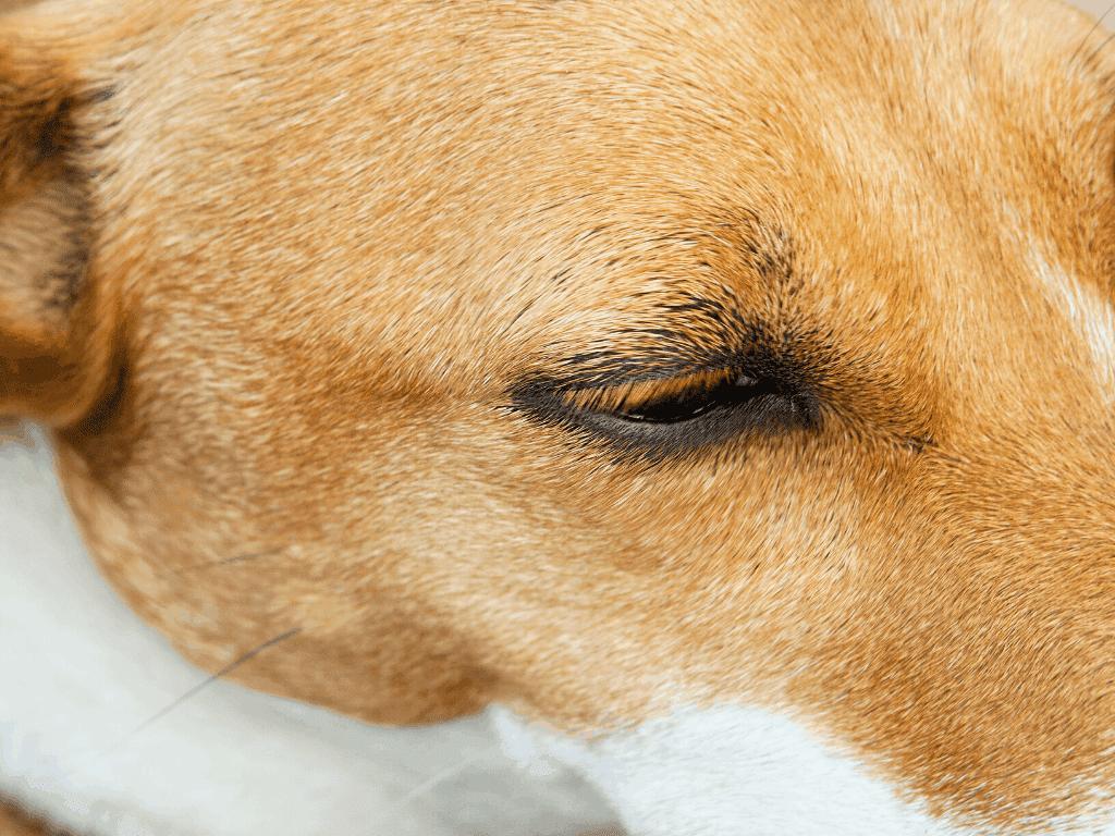 Dog eyelashes.
