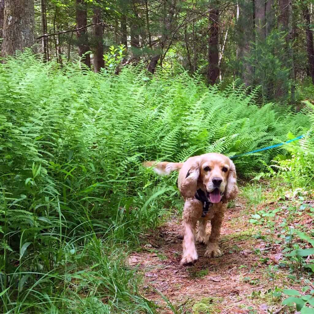 franklin in the ferns