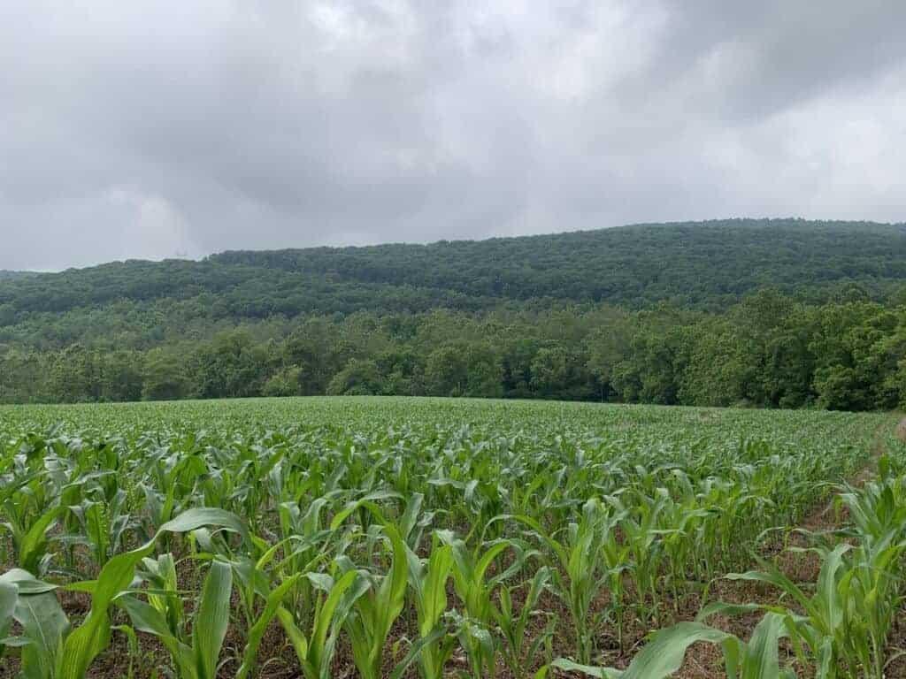 middle ridge trail cornfield