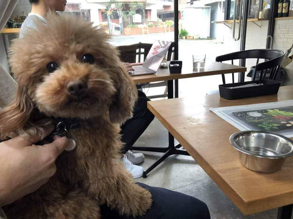Japanese dog at Anea Cafe Tokyo