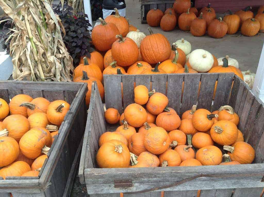 pumpkins Harvest Festivals, Rodeos, Agritourism Events in Florida