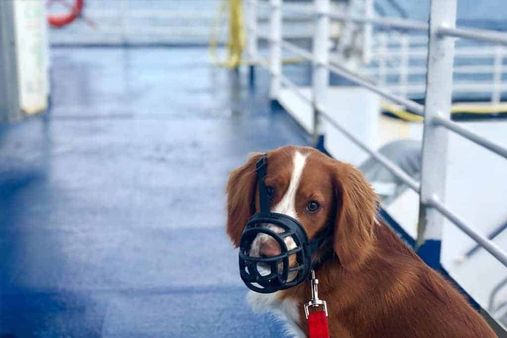 Taking a dog to France- Dog onboard Brittany Ferries with pet friendly cabin from UK to France