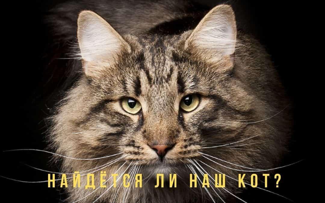 хорарный вопрос найдется ли кот