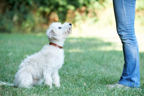 Neuroplasticity: You CAN Teach An Old Dog New Tricks!