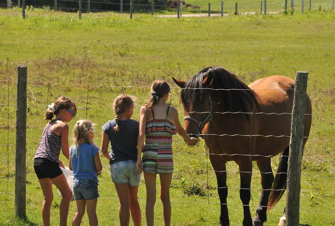 Mini-ferme avec animaux à nourrir et cajoler au Camping Lac-Saint-Michel