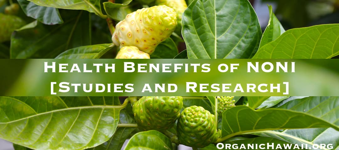 noni health benefits research studies