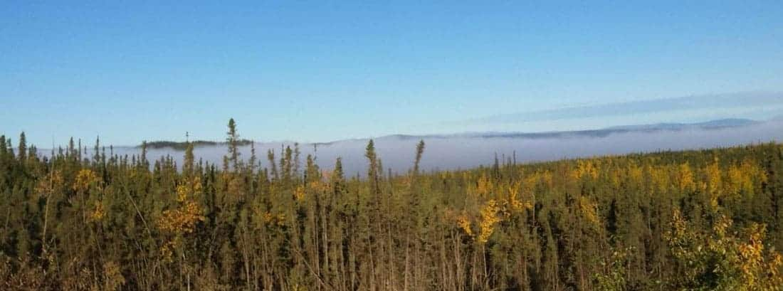 "Research found that ""fast early growth strongly selects against trees reaching old age"" for Black Spruce (Picea Mariana)  trees.  Black spruce dominated forest near the Yukon River.  Photo: Bruce Wylie, USGS, public domain"