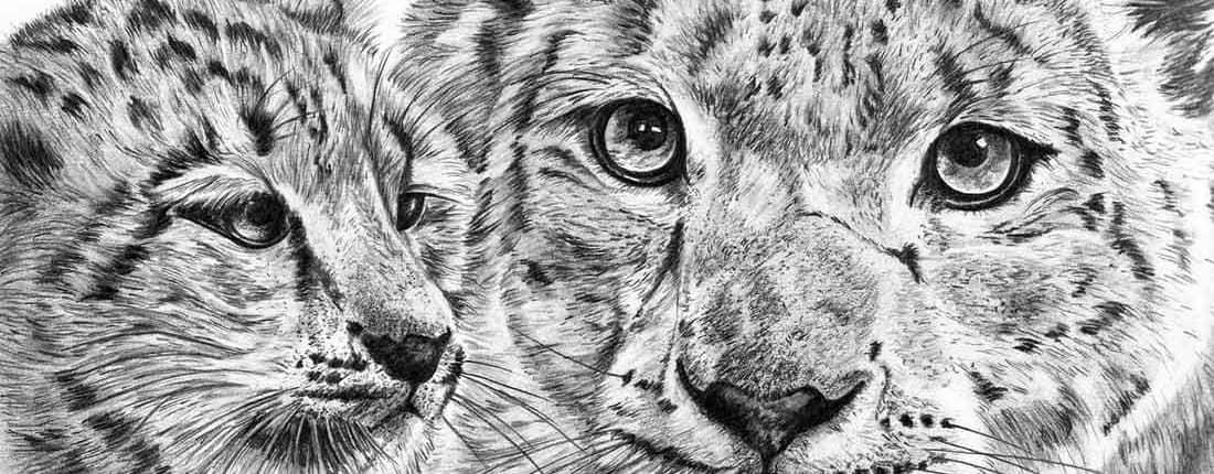Drawing of Snow Leopards