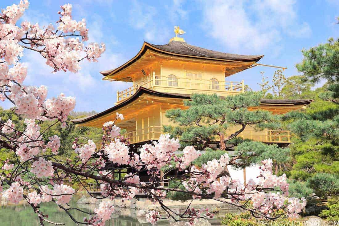 Цветущая сакура около Храма оленьего сада в городе Киото, Япония
