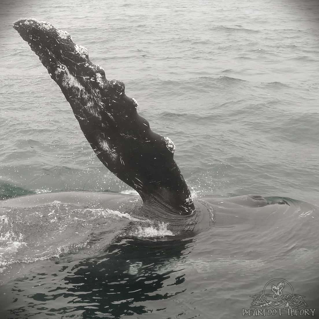Whale Watching at Channel Islands National Park
