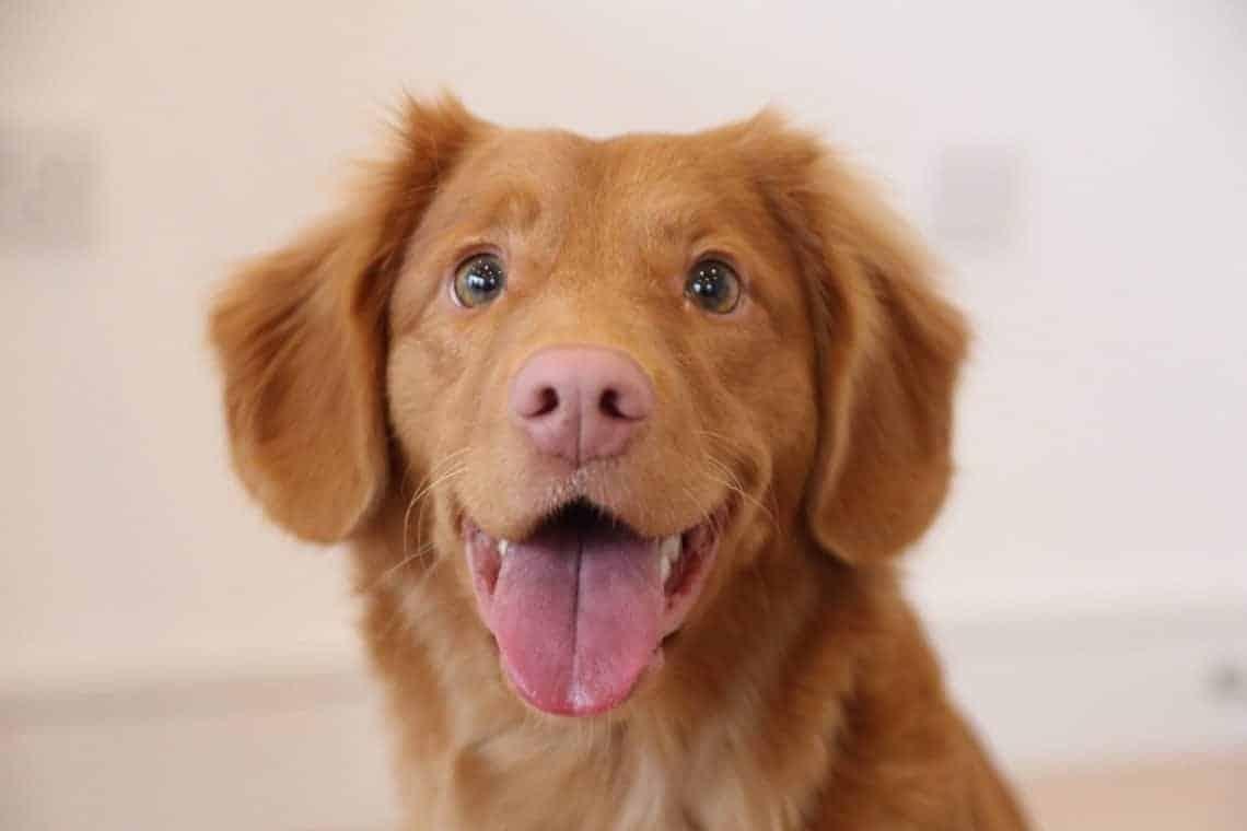 pink liver dog nose