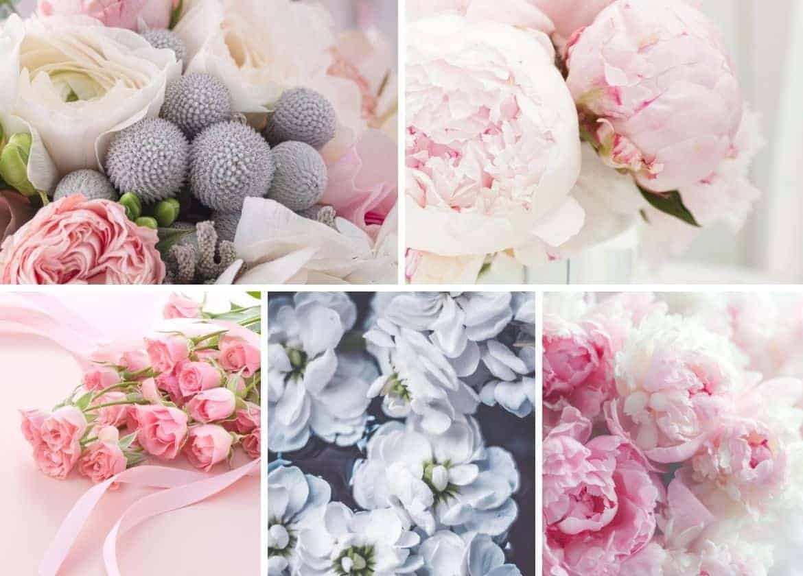 Free Romantic Flower Wallpapers Download for iPhone
