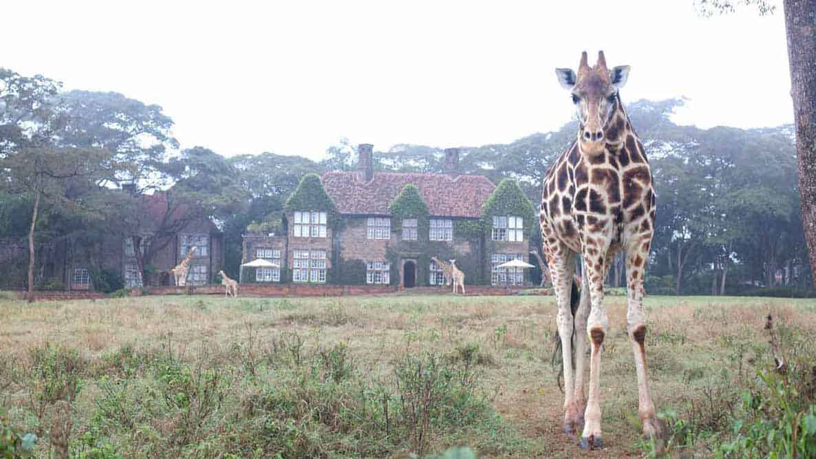 Giraffe Manor View With Giraffe