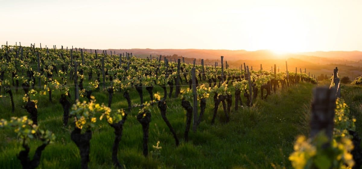 10 Unique Wineries in Provence