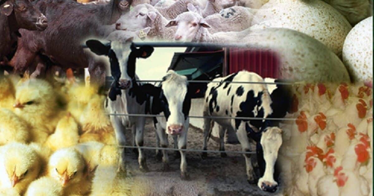 امراض الحيوانات