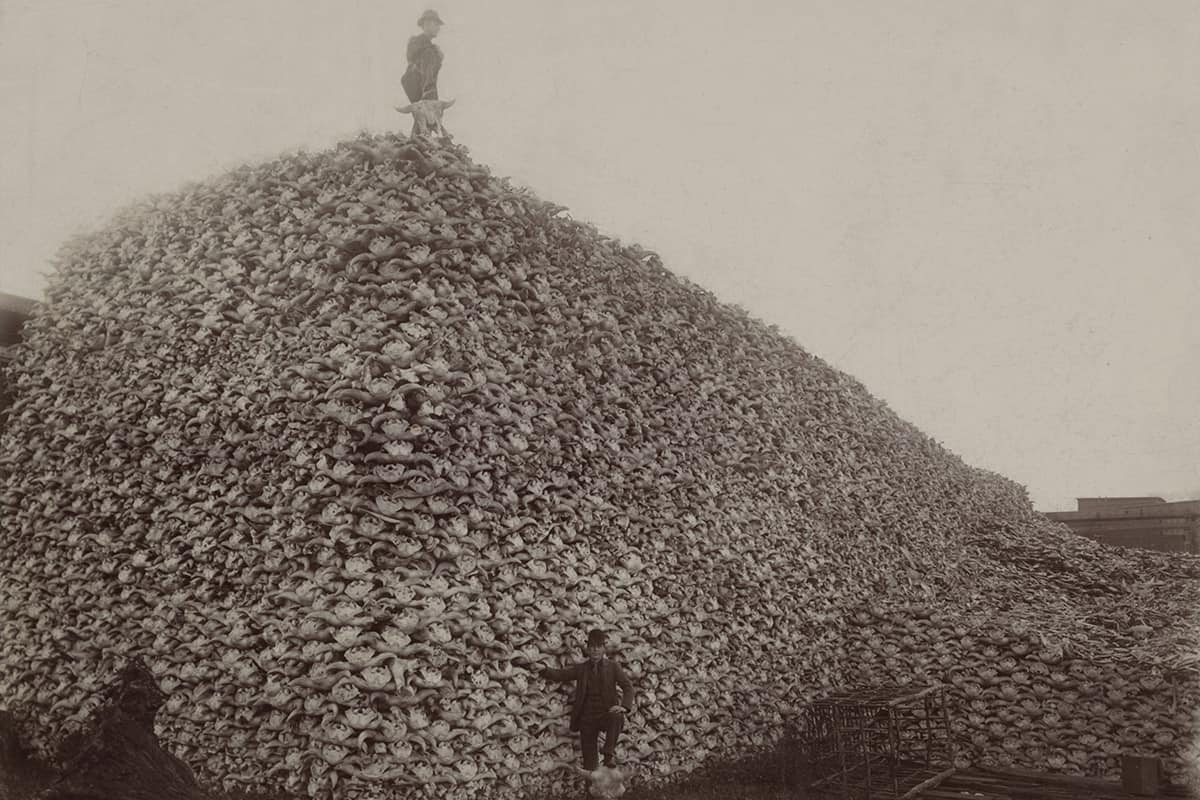 Man holding a skull as he stands atop an enormous bison skull pile
