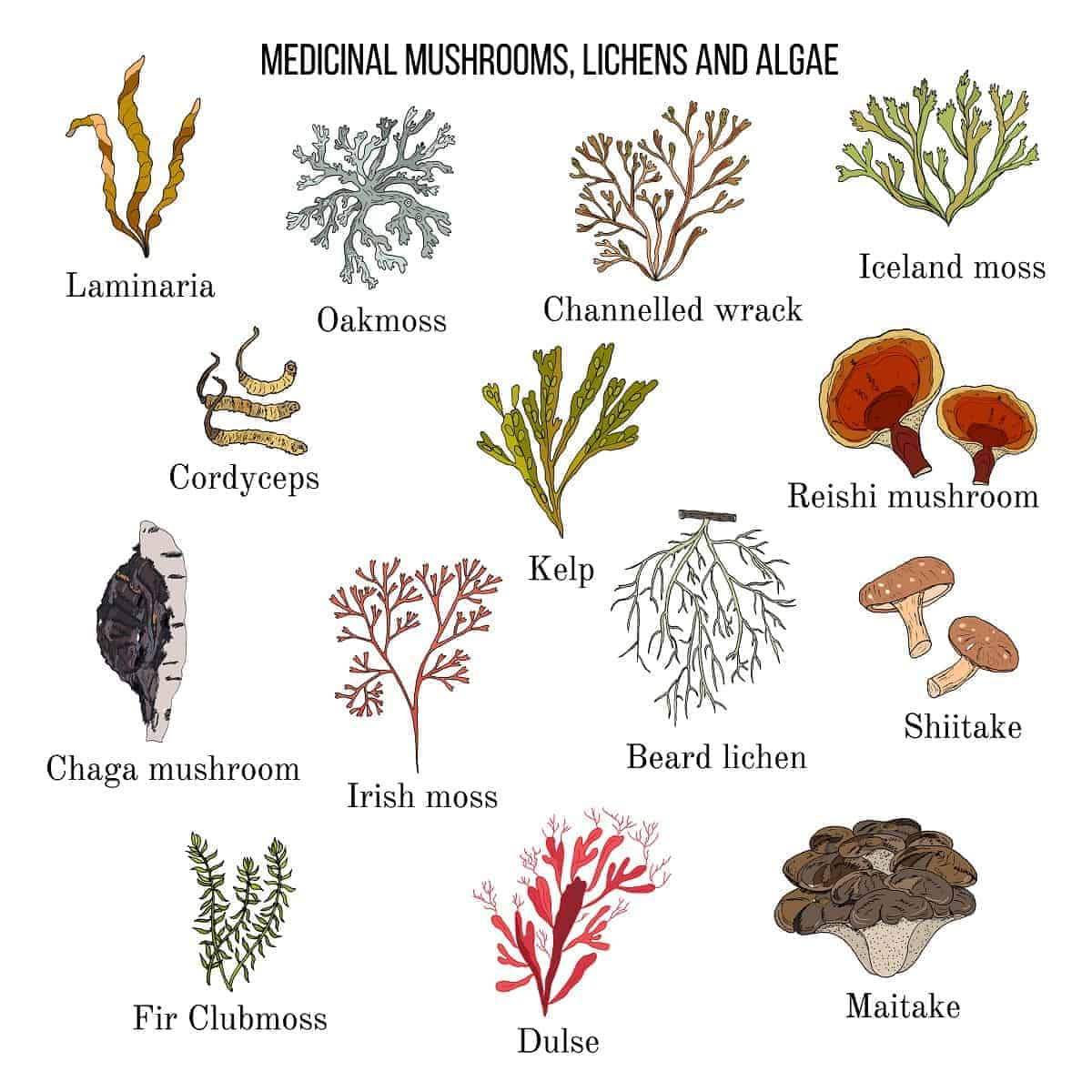 Vector collection of hand drawn medicinal mushrooms