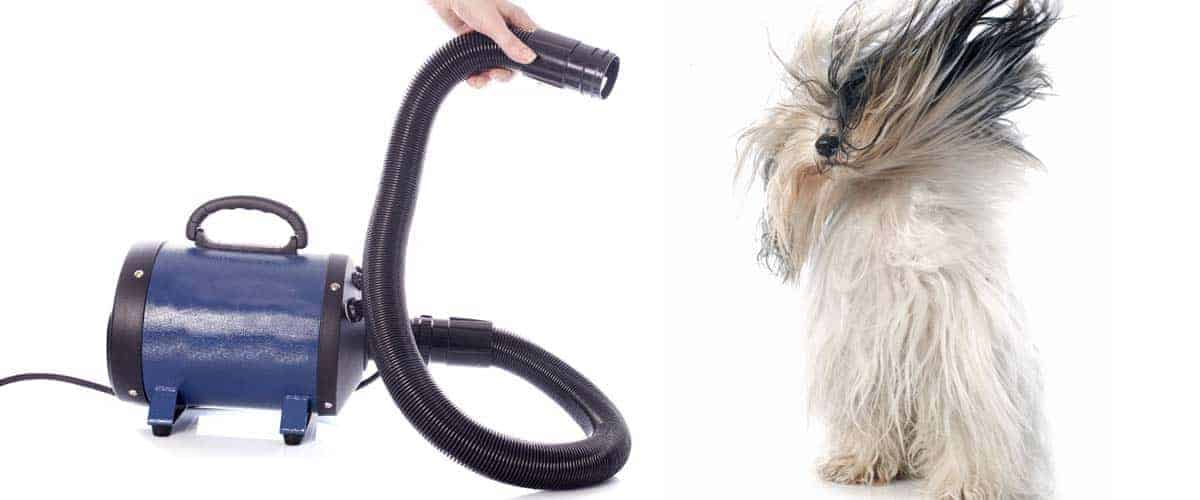 The best dog dryers