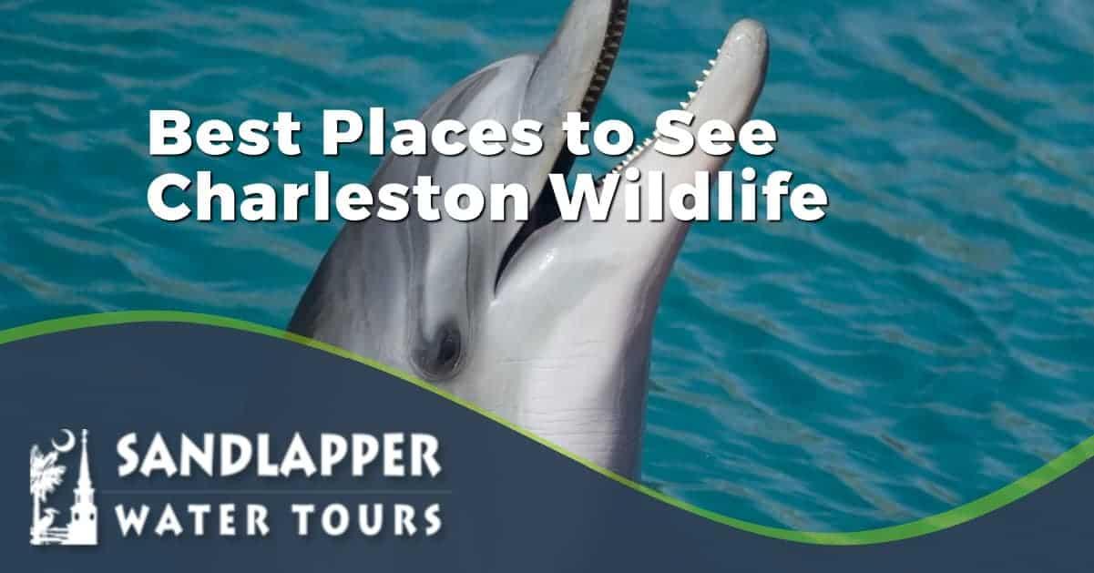Best Places to See Charleston Wildlife. Sandlapper Water Tours Blog