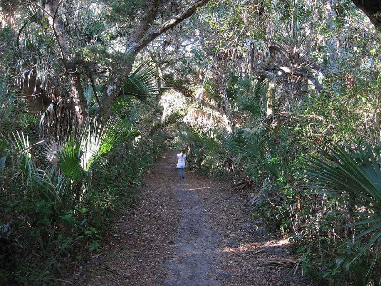 castle windy trail Castle Windy Trail at Canaveral National Seashore