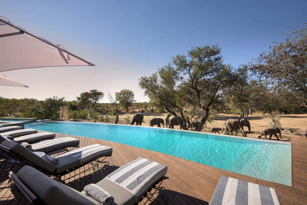 Ngala Safari Lodge Pool