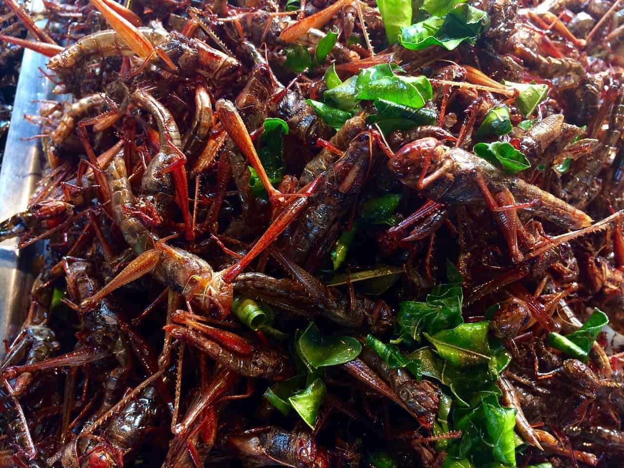 if you think about Eating Insects In Thailand, choose grasshoppers
