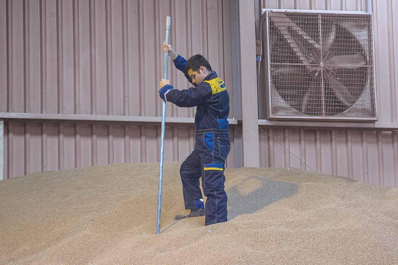 grain sampling spears