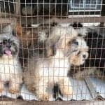 RED FLAGS of a Puppy Mill
