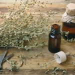 uses of mugwort