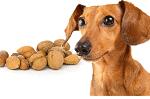 Трябва ли кучетата да ядат ядки