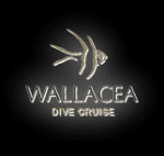Wallacea Dive Cruise