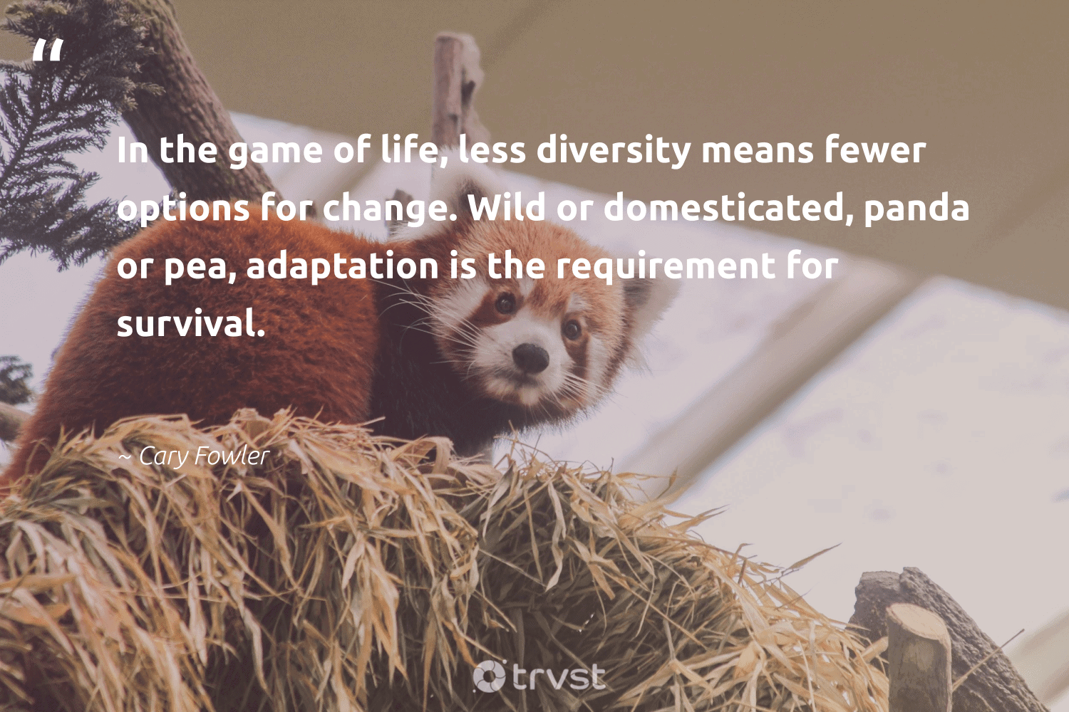 """""""In the game of life, less diversity means fewer options for change. Wild or domesticated, panda or pea, adaptation is the requirement for survival.""""  - Cary Fowler #trvst #quotes #diversity #wild #discrimination #representationmatters #bear #weareallone #bethechange #inclusion #bears #socialgood"""