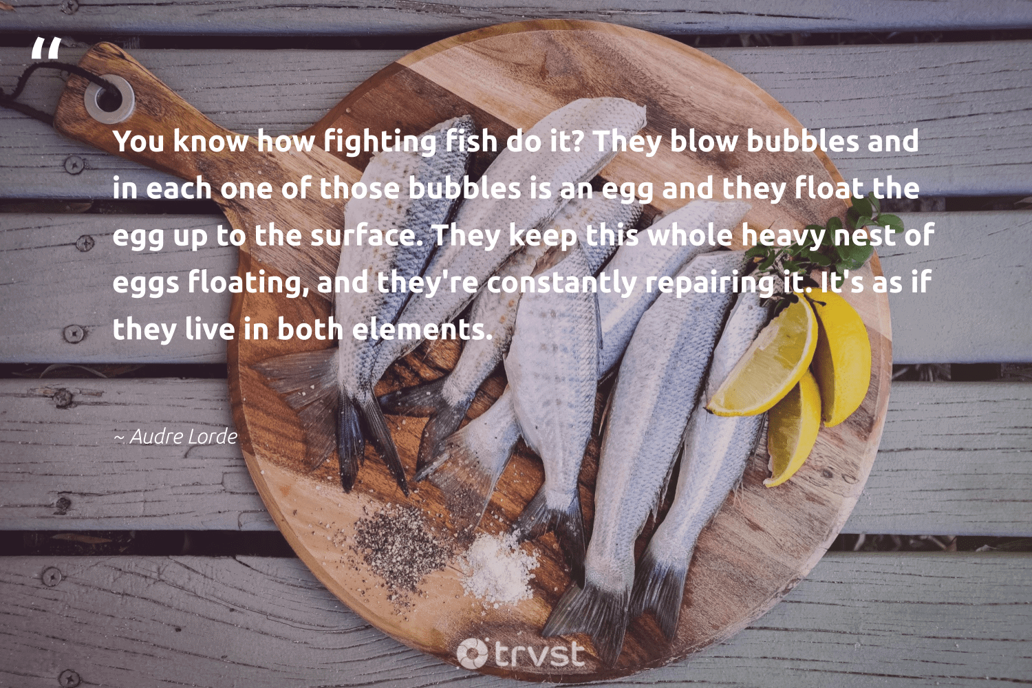 """""""You know how fighting fish do it? They blow bubbles and in each one of those bubbles is an egg and they float the egg up to the surface. They keep this whole heavy nest of eggs floating, and they're constantly repairing it. It's as if they live in both elements.""""  - Audre Lorde #trvst #quotes #fish #sealife #bethechange #healthyocean #takeaction #protectnature #ecoconscious #savetheoceans #collectiveaction #wildlifeprotection"""