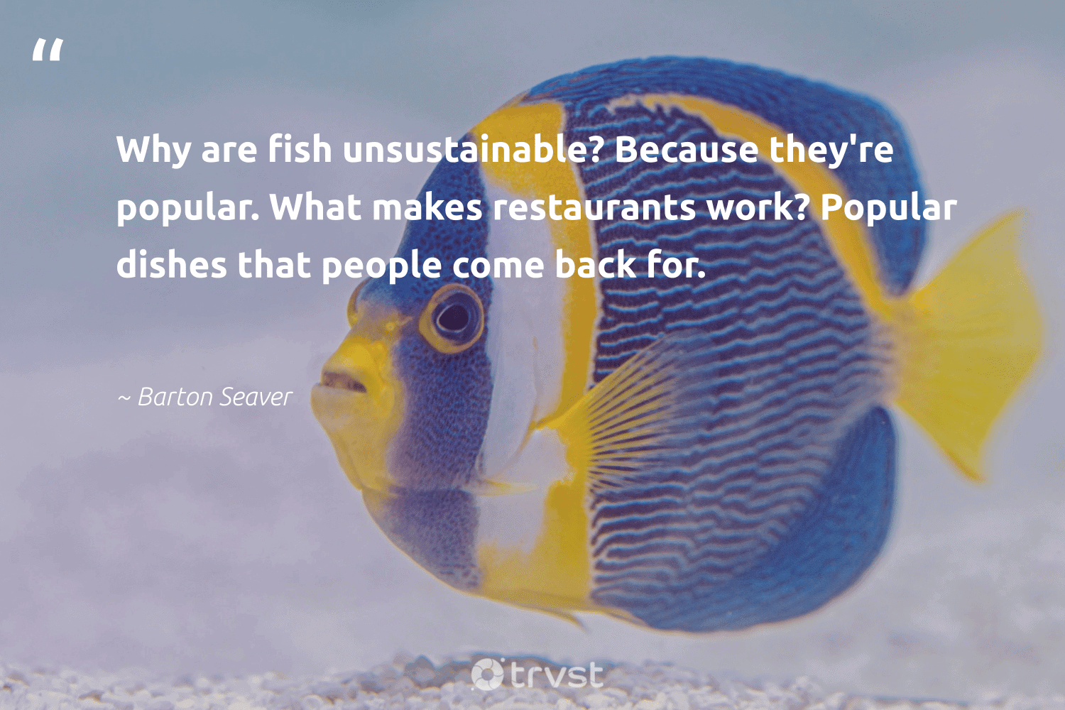 """""""Why are fish unsustainable? Because they're popular. What makes restaurants work? Popular dishes that people come back for.""""  - Barton Seaver #trvst #quotes #fish #conservation #ecoconscious #protectnature #takeaction #savetheoceans #impact #aquaticlife #changetheworld #amazingworld"""