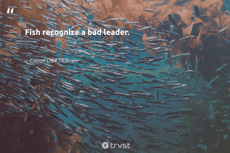"""Fish recognize a bad leader.""  - Conan O'Brien #trvst #quotes #fish #leader #leadership #wildlife #begreat #bethechange #leadershipdevelopment #amazingworld #futureofwork #gogreen"