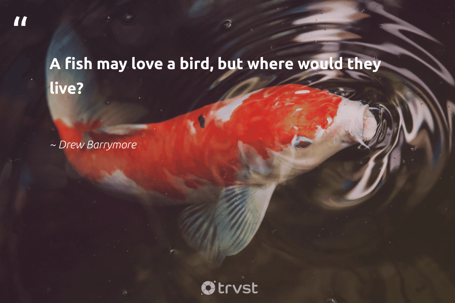 """""""A fish may love a bird, but where would they live?""""  - Drew Barrymore #trvst #quotes #love #fish #bird #birds #savetheoceans #geology #bethechange #protecttheoceans #natural #thinkgreen"""