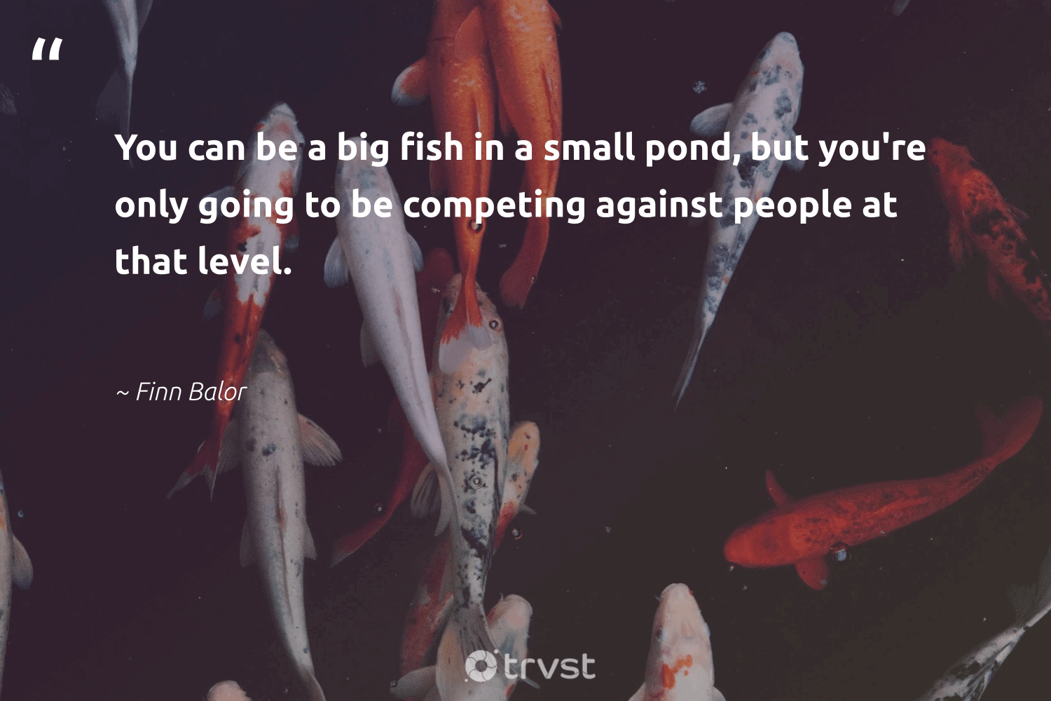 """""""You can be a big fish in a small pond, but you're only going to be competing against people at that level.""""  - Finn Balor #trvst #quotes #fish #aquaticlife #collectiveaction #biodiversity #dotherightthing #sustainability #dogood #perfectnature #changetheworld #intheocean"""