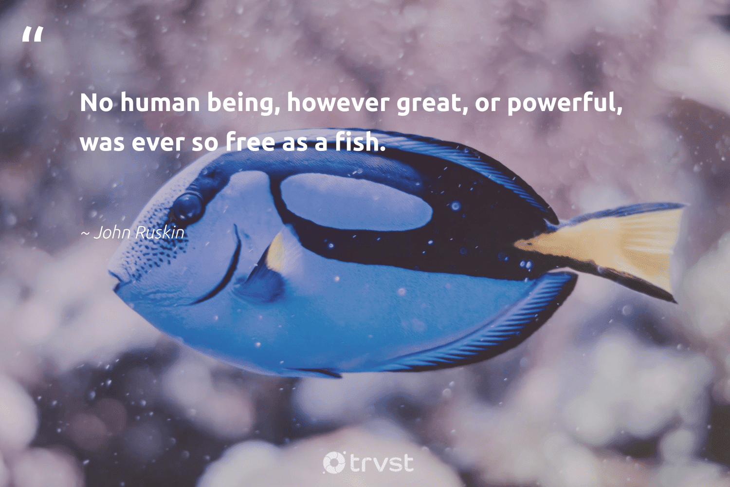 """""""No human being, however great, or powerful, was ever so free as a fish.""""  - John Ruskin #trvst #quotes #fish #oceanconservation #collectiveaction #oceanlove #dosomething #intheocean #changetheworld #nature #planetearthfirst #marinelife"""