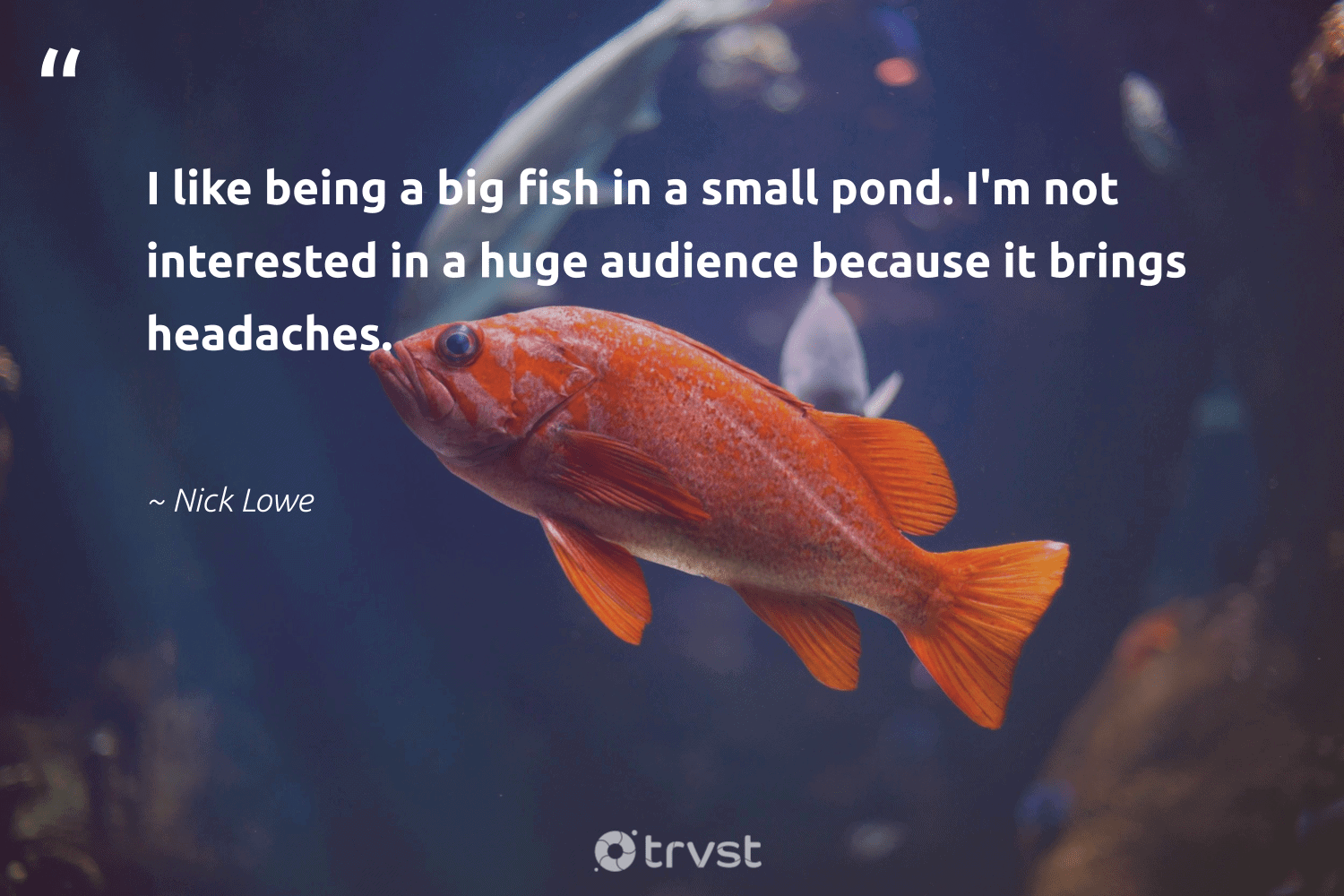 """""""I like being a big fish in a small pond. I'm not interested in a huge audience because it brings headaches.""""  - Nick Lowe #trvst #quotes #fish #savetheoceans #impact #conservation #dogood #protectnature #beinspired #biodiversity #ecoconscious #oceanlove"""