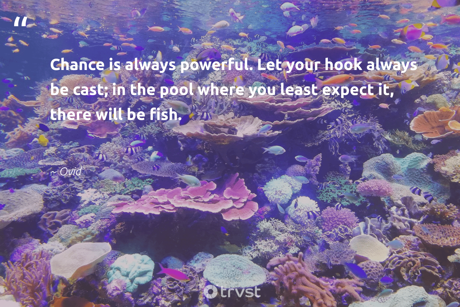 """""""Chance is always powerful. Let your hook always be cast; in the pool where you least expect it, there will be fish.""""  - Ovid #trvst #quotes #fish #conservation #planetearthfirst #biodiversity #bethechange #nature #dotherightthing #sustainablefishing #socialchange #oceanconservation"""