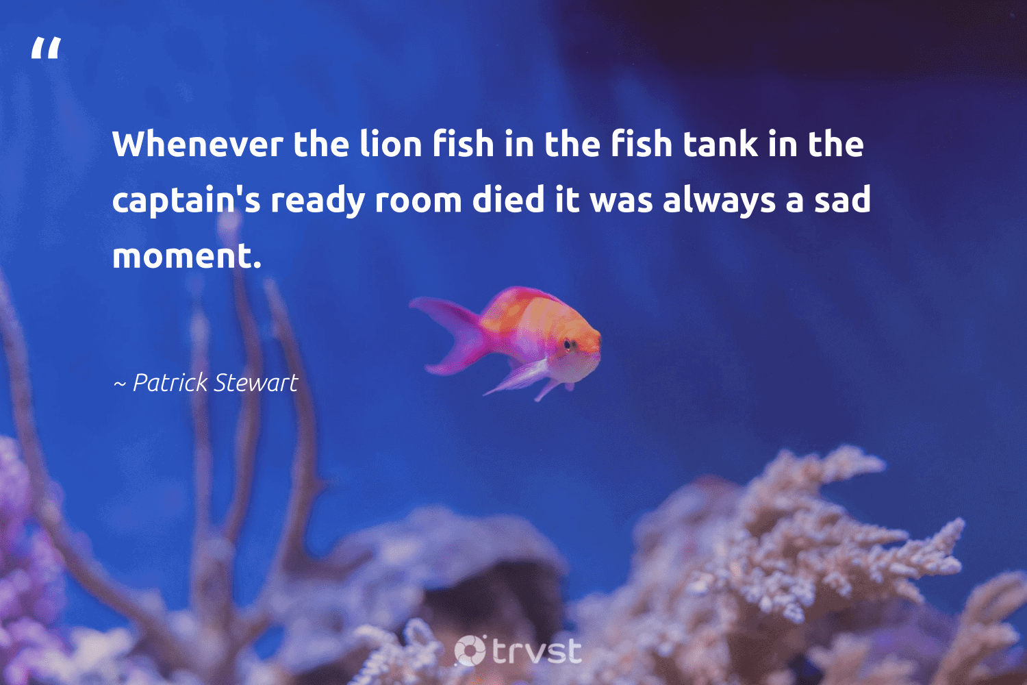 """""""Whenever the lion fish in the fish tank in the captain's ready room died it was always a sad moment.""""  - Patrick Stewart #trvst #quotes #fish #sustainablefishing #socialchange #marinelife #impact #biodiversity #bethechange #conservation #takeaction #healthyocean"""