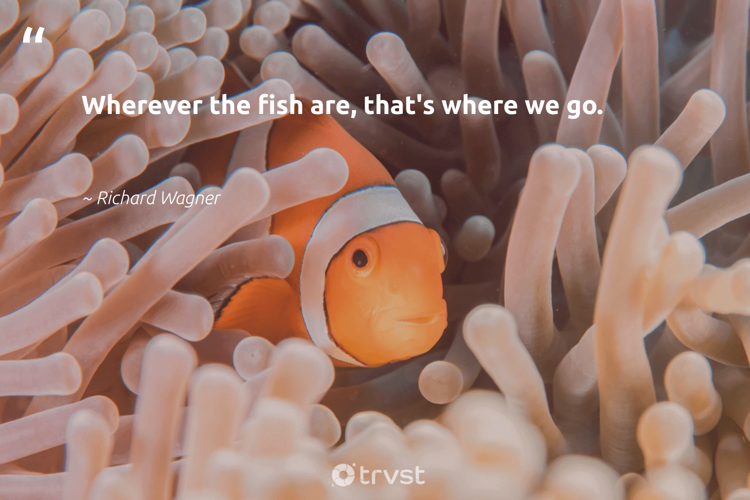"""""""Wherever the fish are, that's where we go.""""  - Richard Wagner #trvst #quotes #fish #intheocean #beinspired #marinelife #impact #healthyocean #takeaction #oceanconservation #thinkgreen #protectnature"""