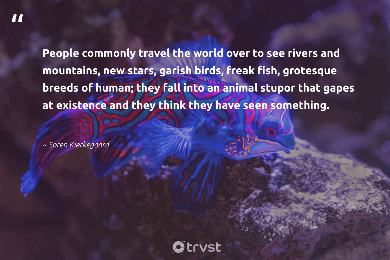 """""""People commonly travel the world over to see rivers and mountains, new stars, garish birds, freak fish, grotesque breeds of human; they fall into an animal stupor that gapes at existence and they think they have seen something.""""  - Soren Kierkegaard #trvst #quotes #rivers #mountains #fish #birds #animal #travel #wildlife #conservation #biology #impact"""