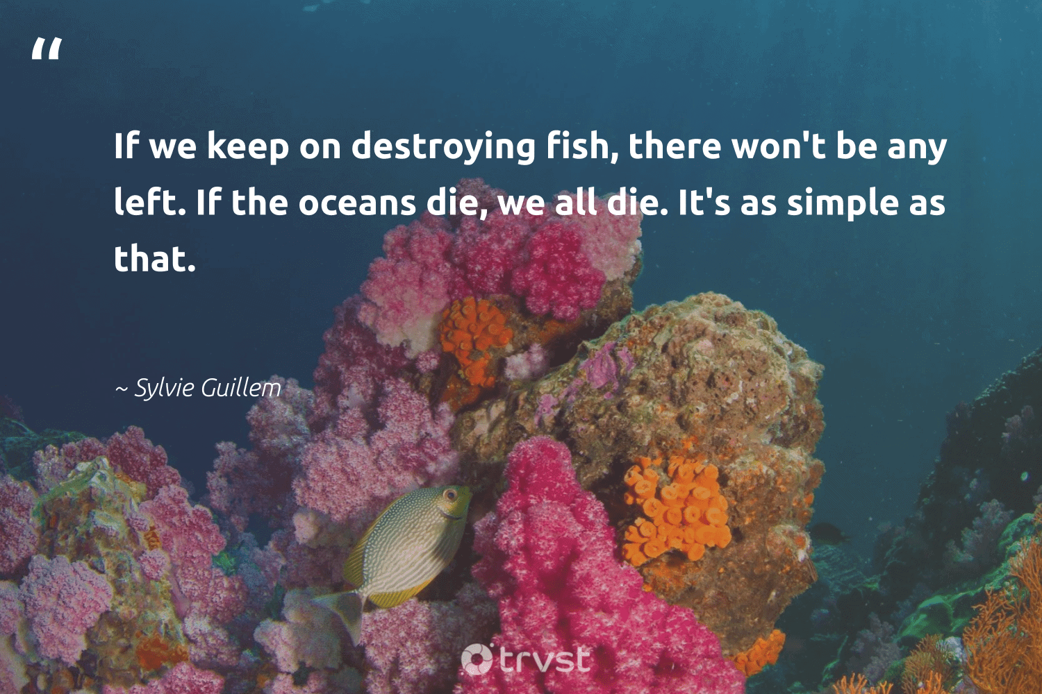 """""""If we keep on destroying fish, there won't be any left. If the oceans die, we all die. It's as simple as that.""""  - Sylvie Guillem #trvst #quotes #fish #oceans #healthyocean #changetheworld #sealife #gogreen #sustainability #socialchange #oceanlove #dosomething"""